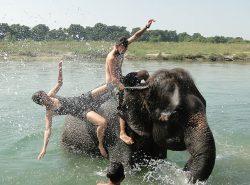 Elephant bathing in Nepal - Kathmandu to Singapore overland trip
